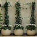 שלושה כדים עגולים עם פרחים בתוכם