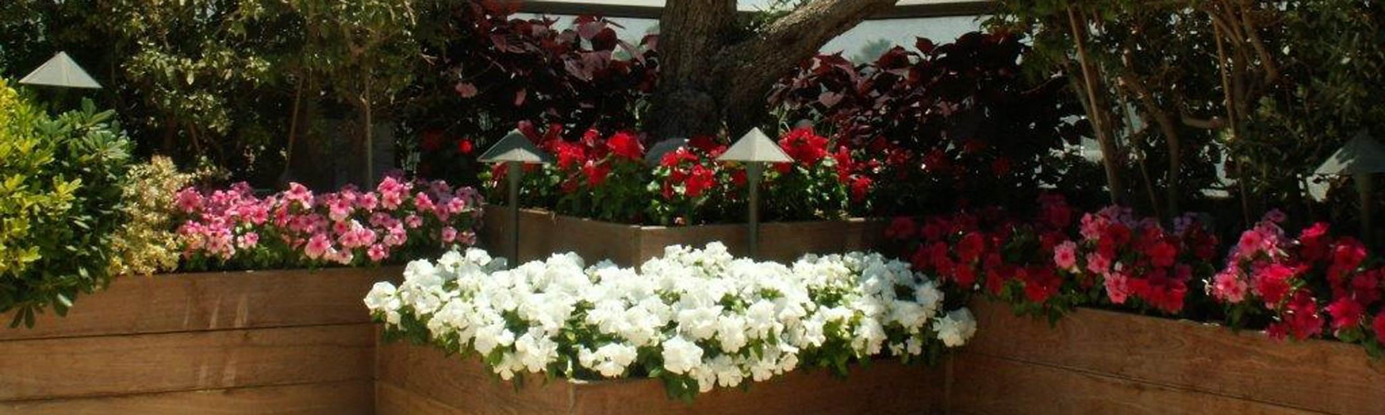 אדניות עץ עם פרחים מעוצבים