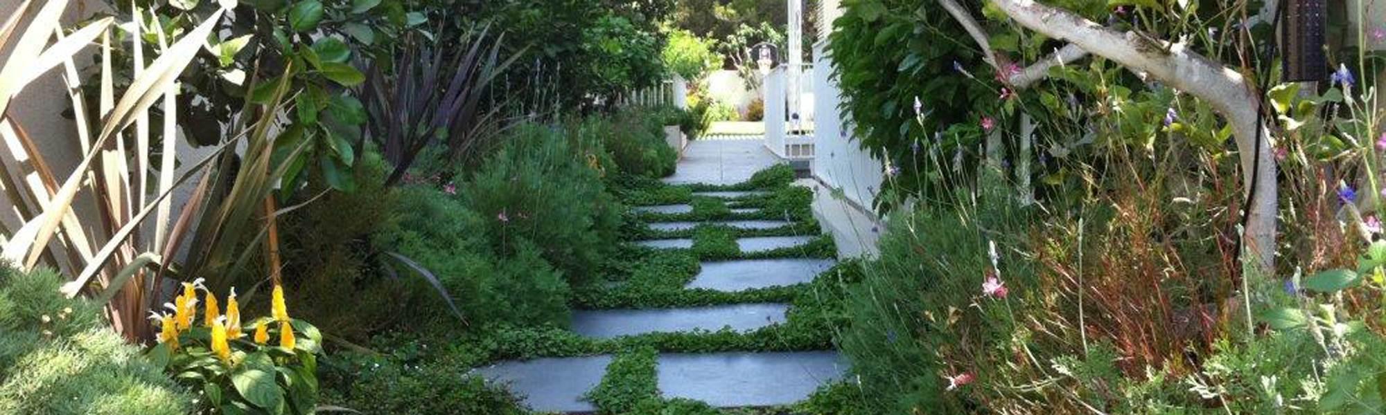שביל גישה בגינה מעוצבת בשיחים