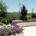 גינת גג מעוצבת עם פרחים סגולים
