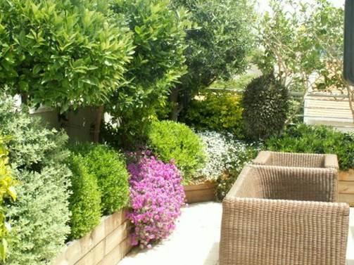 צמחים מומלצים לשילוב בגינה הישראלי