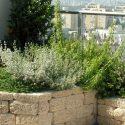 גינת גג מעוצבת עם צמחייה ואדניה מאבנים משולבות