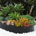 צמחייה מגוונת בסוגי צמחים שונים על אבנים לבנות