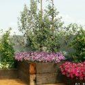 אדניות עץ עם פרחים ועצים שונים בגינת גג