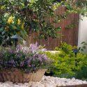גינה מעוצבת עם תאורת גן ועצי לימון