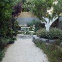 גינת מעוצבת עם עץ זית ושביל לבן