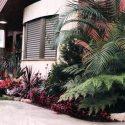 צמחייה מעוצבת בכניסה לבית פרטי