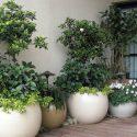 כדים עגולים בעיצובים שונים וצמחייה שונה מוצבים על דק מעץ