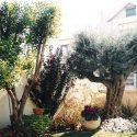 עצים מעוצבים בגינה של בית פרטי