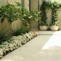 עיצוב צמחייה בכניסה לבית