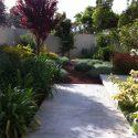 צמחייה ייחודית בגינה פרטית