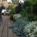 צמחים מטפסים ושיחים מעוצבים בגינת בית פרטי בשילוב דק ופינות ישיבה