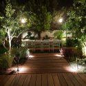 עץ זית בגינת חוץ עם תאורה מעוצבת